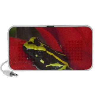 South America, Amazon Basin. Close-up of Travelling Speaker