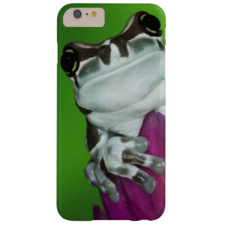 South America, Brazil, Amazon Basin. Close-up of 2 Barely There iPhone 6 Plus Case