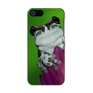South America, Brazil, Amazon Basin. Close-up of 2 Metallic iPhone SE/5/5s Case