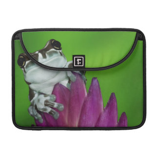 South America, Brazil, Amazon Basin. Close-up of 2 Sleeve For MacBook Pro