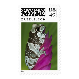 South America, Brazil, Amazon Basin. Close-up of Postage Stamp