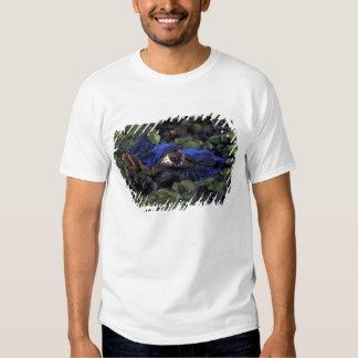 South America, Brazil, Amazon Rainforest, 2 T-Shirt