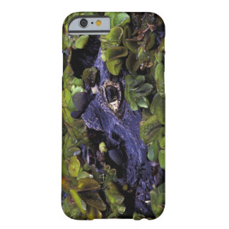 South America, Brazil, Amazon Rainforest, 3 Barely There iPhone 6 Case