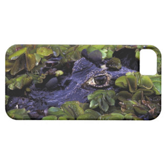 South America, Brazil, Amazon Rainforest, 3 iPhone SE/5/5s Case