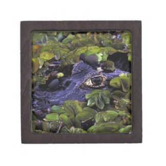 South America, Brazil, Amazon Rainforest, 3 Jewelry Box