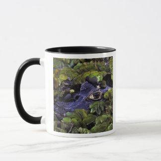 South America, Brazil, Amazon Rainforest, 3 Mug