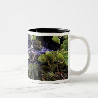 South America, Brazil, Amazon Rainforest, 3 Two-Tone Coffee Mug