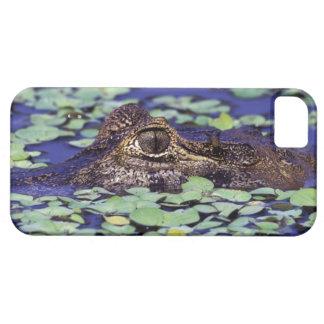 South America, Brazil, Amazon Rainforest, 4 iPhone SE/5/5s Case