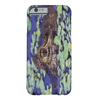 South America, Brazil, Amazon Rainforest, 4 iPhone 6 Case