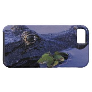 South America, Brazil, Amazon Rainforest, iPhone 5 Case