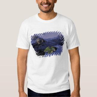 South America, Brazil, Amazon Rainforest, T-Shirt