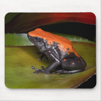 South America, Brazil. Close-up of a variety Mouse Pad