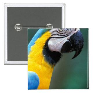 South America, Brazil, Iguacu Natioanl Park, 2 Inch Square Button