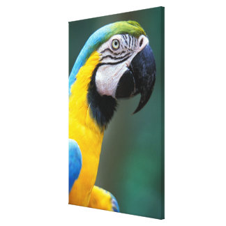 South America, Brazil, Iguacu Natioanl Park, Canvas Print
