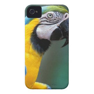 South America, Brazil, Iguacu Natioanl Park, iPhone 4 Covers