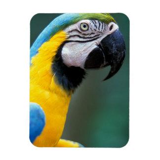 South America, Brazil, Iguacu Natioanl Park, Rectangular Photo Magnet