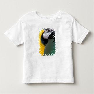 South America, Brazil, Iguacu Natioanl Park, Shirt