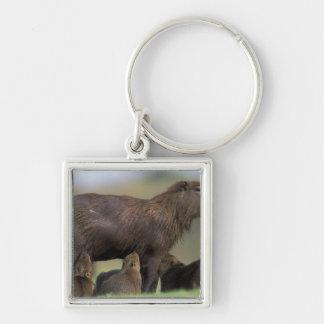 South America, Brazil, Pantanal Capybara Keychain
