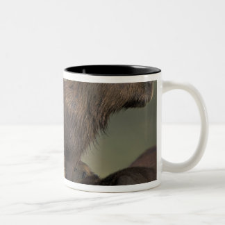 South America, Brazil, Pantanal Capybara Two-Tone Coffee Mug