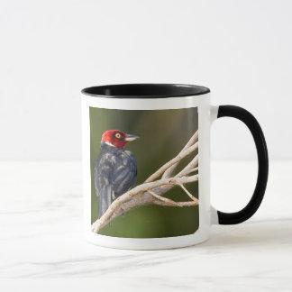 South America, Brazil, Pantanal, San Francisco Mug