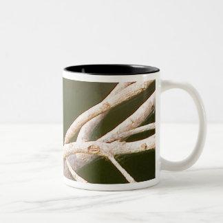 South America, Brazil, Pantanal, San Francisco Two-Tone Coffee Mug