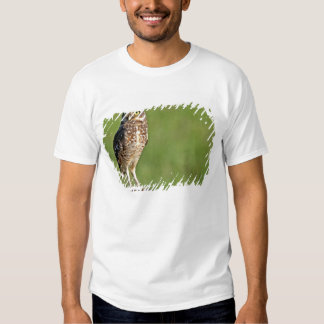South America, Brazil, Pantanal.  The Burrowing T-Shirt