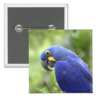 South America, Brazil, Pantanal. The endangered 2 2 Inch Square Button
