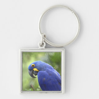 South America, Brazil, Pantanal. The endangered 2 Keychain