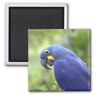 South America, Brazil, Pantanal. The endangered 2 Fridge Magnets
