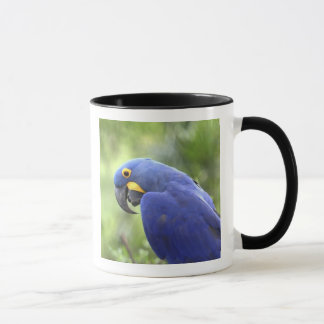 South America, Brazil, Pantanal. The endangered 2 Mug