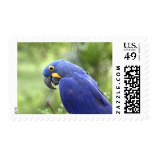 South America, Brazil, Pantanal. The endangered 2 Postage Stamp