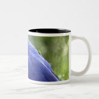 South America, Brazil, Pantanal. The endangered 2 Two-Tone Coffee Mug