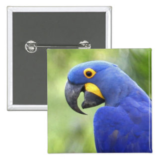 South America, Brazil, Pantanal. The endangered 2 Inch Square Button