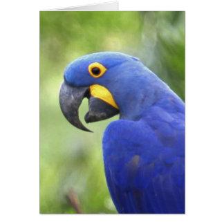 South America, Brazil, Pantanal. The endangered Card