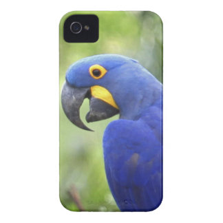 South America, Brazil, Pantanal. The endangered Case-Mate iPhone 4 Case