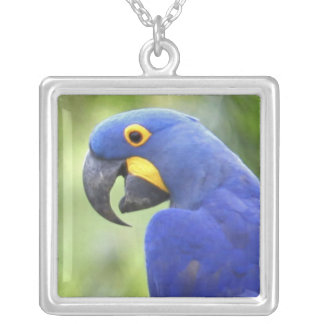 South America, Brazil, Pantanal. The endangered Square Pendant Necklace
