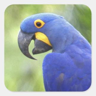 South America, Brazil, Pantanal. The endangered Square Sticker