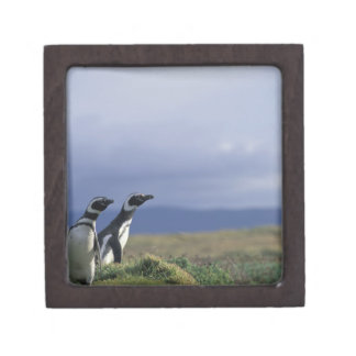 South America, Chile, Patagonia, Magellanes, 2 Gift Box