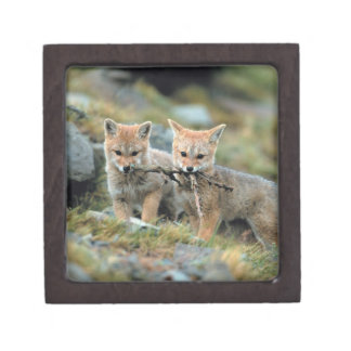 South America, Chile, Torres del Paine National Keepsake Box