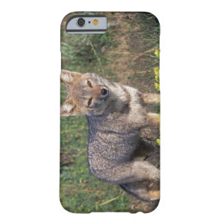 South America, Chile, Torres del Paine NP, Barely There iPhone 6 Case