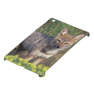 South America, Chile, Torres del Paine NP, Case For The iPad Mini