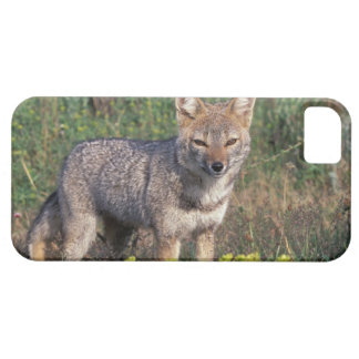 South America, Chile, Torres del Paine NP, iPhone 5 Cover