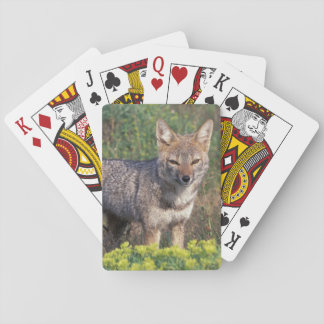 South America, Chile, Torres del Paine NP, Playing Cards