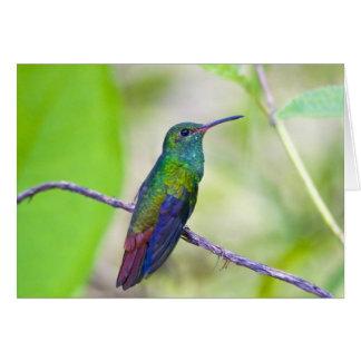South America, Costa Rica, Sarapiqui, La Selva Greeting Card