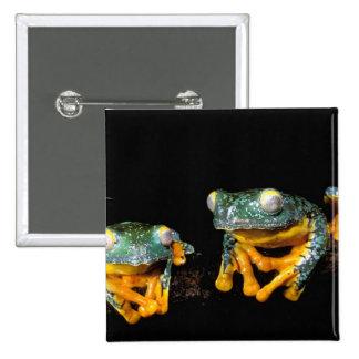 South America, Ecuador, Amazon. Leaf frogs 2 Inch Square Button