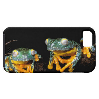 South America, Ecuador, Amazon. Leaf frogs iPhone 5 Cases