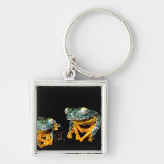 South America, Ecuador, Amazon. Leaf frogs Keychain