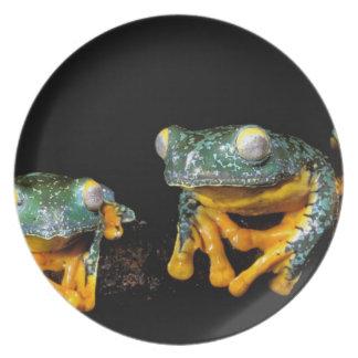 South America, Ecuador, Amazon. Leaf frogs Melamine Plate