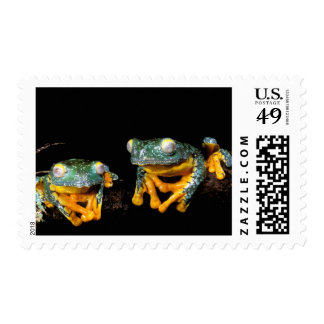 South America, Ecuador, Amazon. Leaf frogs Stamps