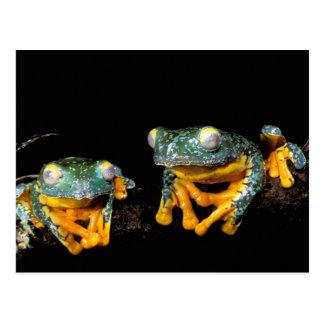 South America, Ecuador, Amazon. Leaf frogs Postcard